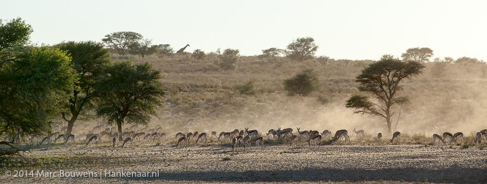 2014Afrika-0312-2