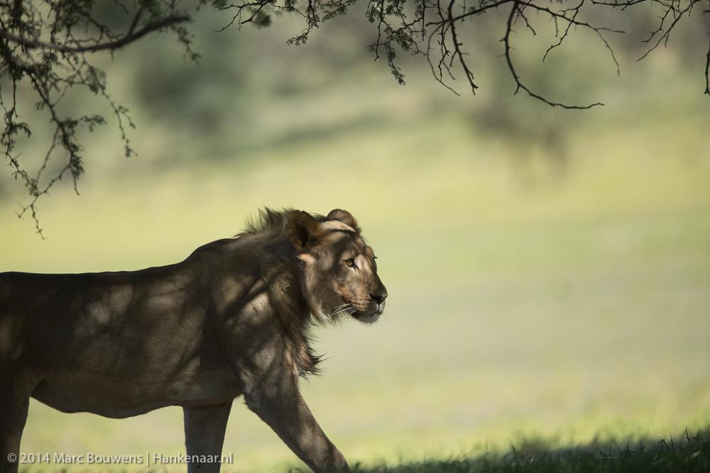 2014Afrika-0939-2